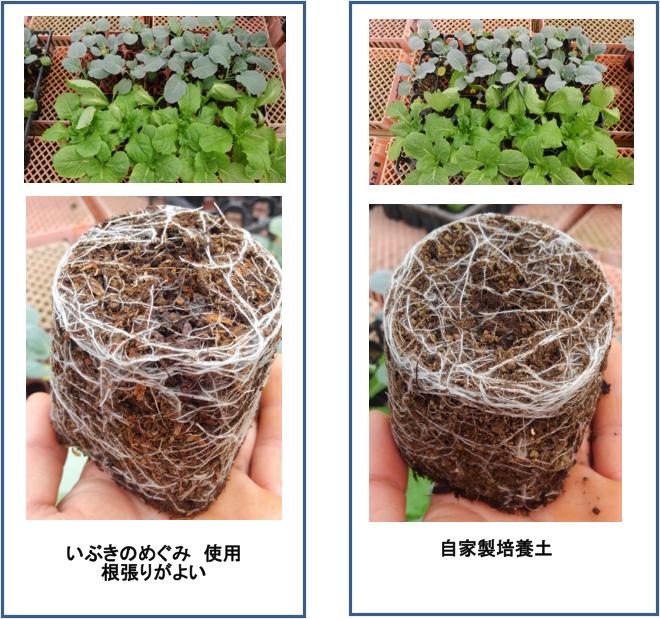 いぶきのめぐみ使用培養土