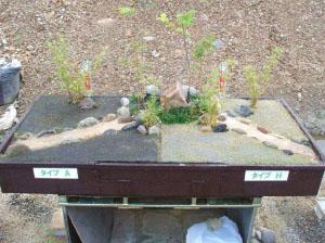 屋上緑化剤